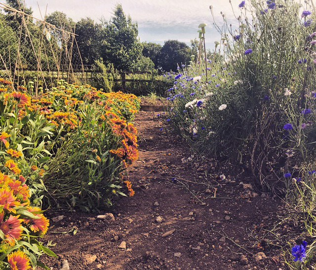 Wiltshire, British flower week