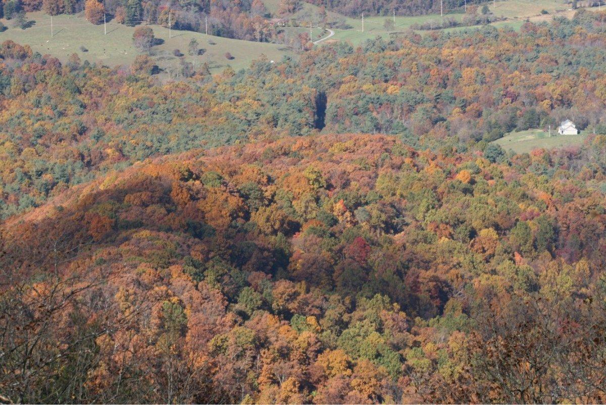 shenandoah national park fall colors leaves