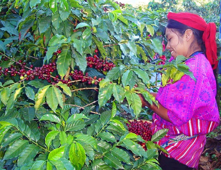 Farmer_MiralValle_Young_Hustler_Coffee_Guatemala