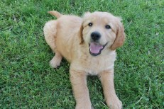 She's a sassy puppy!