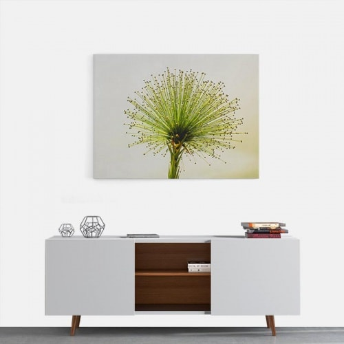 Canvas Dandelion