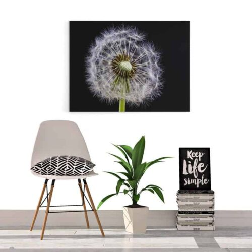 Canvas Dandelion in detail