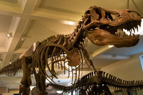 New-York-American-Museum-of-Natural-History