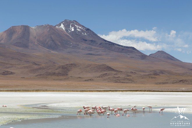 Photograph of flamingos on Laguna Hedionda in national park Eduardo Avaroa in the South West of Bolivia.