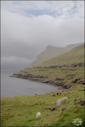 Faroe Islands Wedding Locations-3