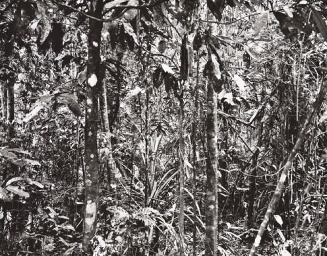 """Thomas Struth: """"Paradise"""", 2004, 6 pigmentierte Tintenstrahldrucke auf leichtem Karton, Format je 50 × 35 cm, lim. Auflage"""