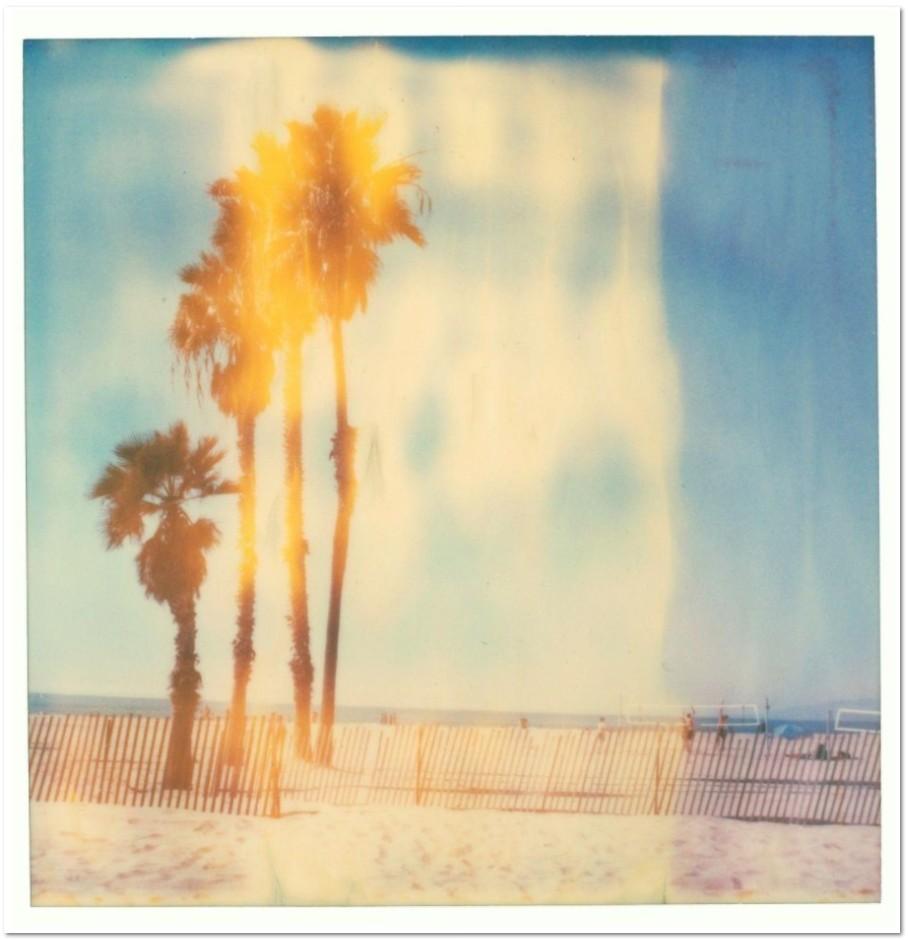 Stefanie Schneider Santa Monica Palm Trees