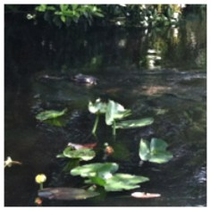 We definitely found some gators in the water (and on our walking path!) at the Everglades Safari Park.
