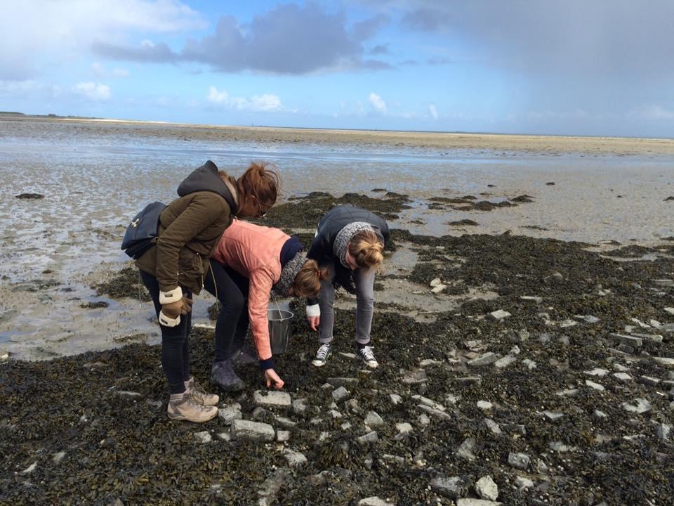 oesters zoeken
