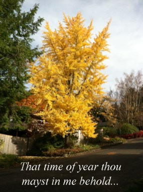 That time of year thou mayst in me behold when yellow leaves or none or few...