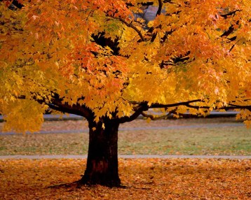 That time of year thou mayst in me behold When yellow leaves, or none, or few, do hang Upon those boughs which shake against the cold, Bare ruin'd choirs where late the sweet birds sang Shakespeare on Fall