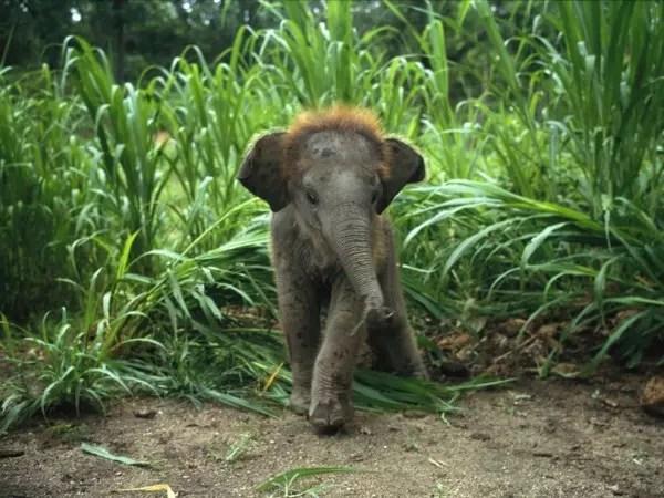 baby-animals-32