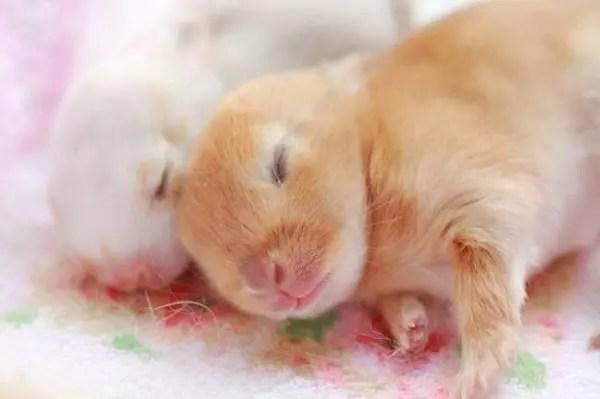 baby-animals-37