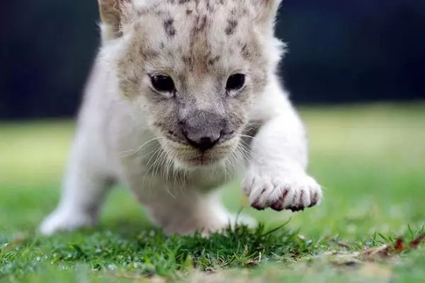 baby-animals-46