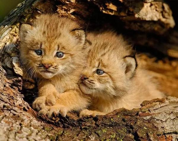 baby-animals-67