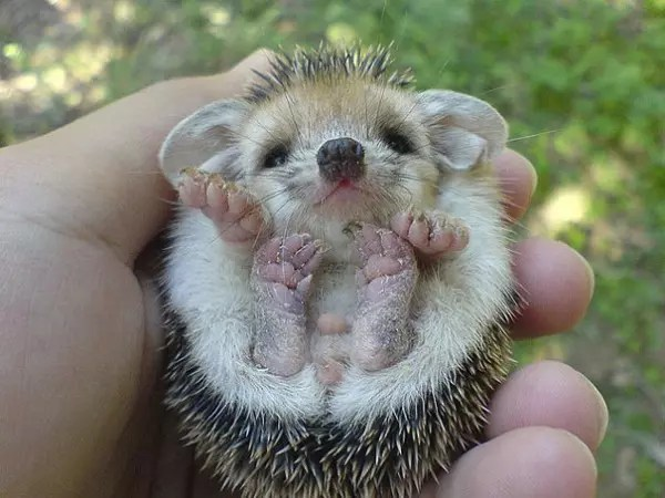 baby-animals-8