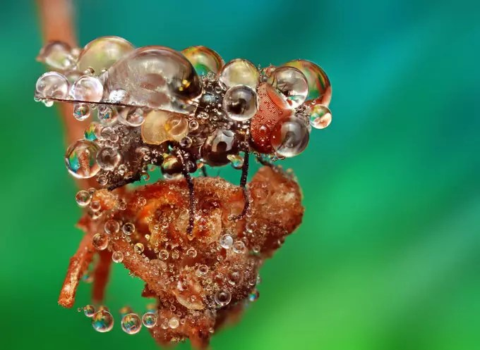 Jewel by Ondrej Pakan - Downloaded from 500px_jpg