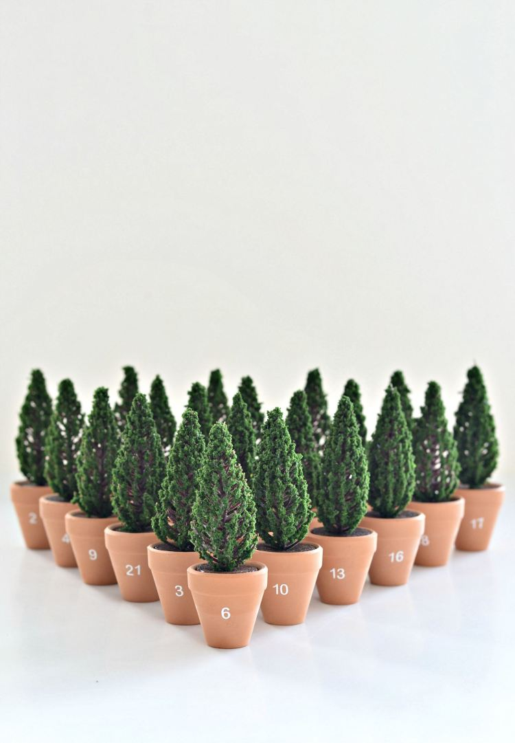 planted Christmas tree advent calendar