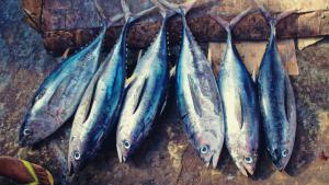 image of dead fish