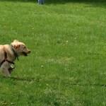 Your Dog S Friend Free Dog Training Resources Dog