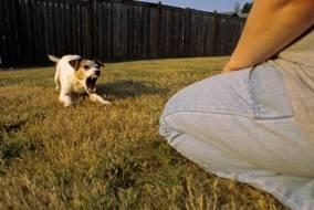 How Can I Stop My Dog From Barking At Strangers
