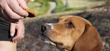 dogcookie