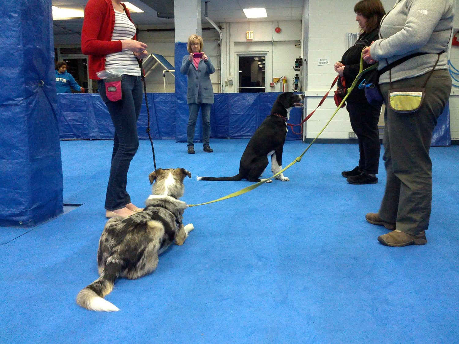 Help! My Dog Barks & Lunges At Other Dogs! — Your Dog's Friend