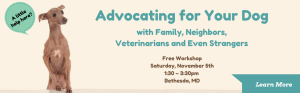 advocating for your dog with family, neighbors, vets, and even strangers. Free workshop Saturday November 5th at 1:30 pm in Bethesda, Maryland. Photo of a nervous brown sighthound with a speech bubble that says, A little help here?
