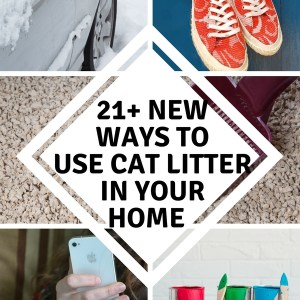 21 New Ways to Use Cat Litter In Your Home