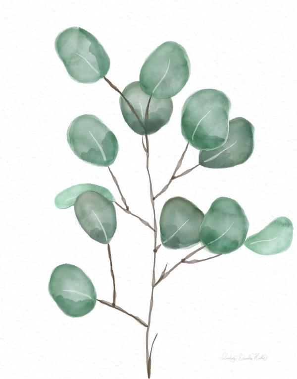 Watercolor Eucalyptus Set