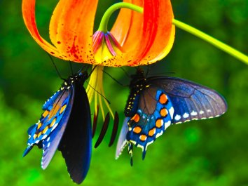 Butterfly-Photos-2