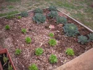One of our garden plots in 2013