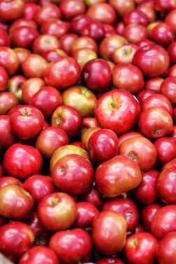 apples are crushed and fermented to make apple cider vinegar
