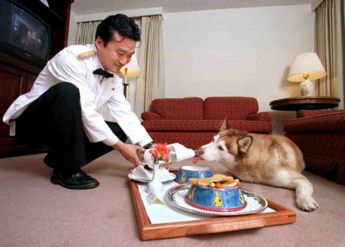 Revitalizing Hotel Room Occupancy Rates - offer pet friendly rooms