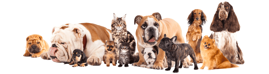 pet_collection