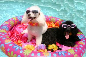 dogs-floating-pool