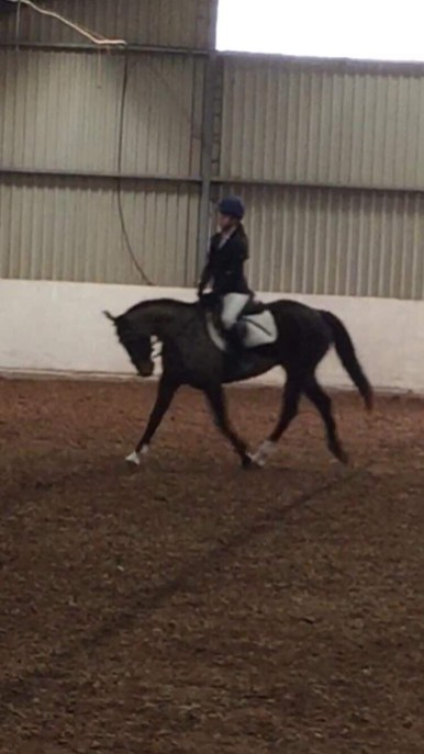 Doing well at dressage