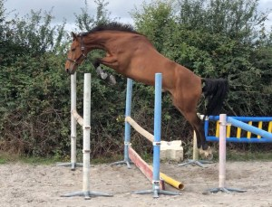 horse loosejumping