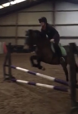 Dainty jumping. An Irish dun pony 146cm