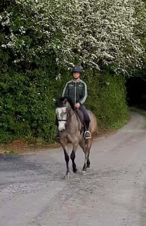 Kilickle Laurey a grey pony walking