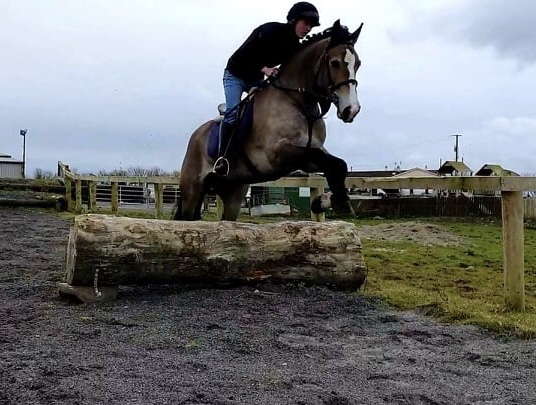 Castledaly Sophie a dun horse jumping a log