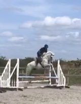 Foxhall Dragonfly a white pony jumping a fence