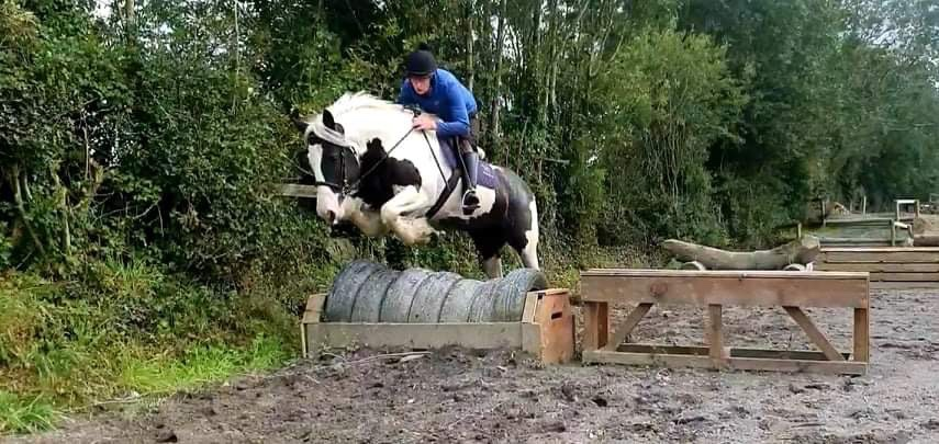 Gary's Pride a piebald pony jumping a fence