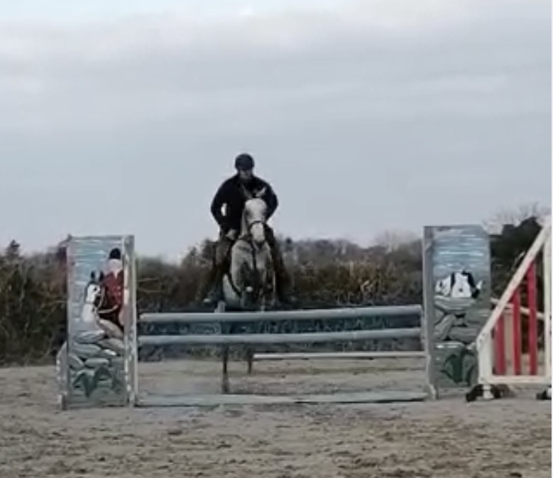 Grey pony jumping an upright fence