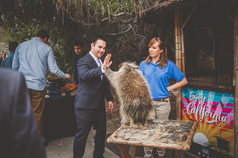 living desert wedding high five porcupine