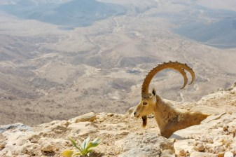 Negev Tour