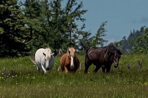 3 horses paint