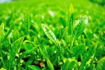 Photo credit: ajari via Foter.com