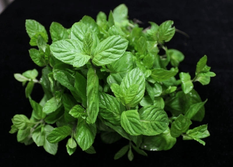 Mint-with-Green-Tea-is-a-popular-combination