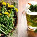 8 Benefits of Dandelion Tea Can Make Your Health Better